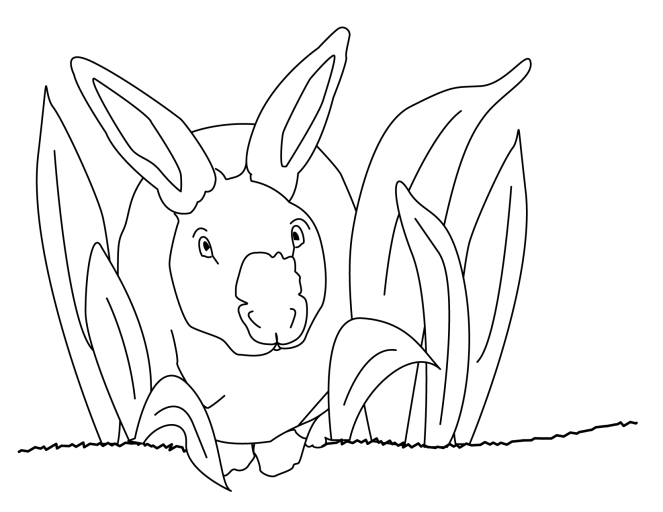 bunny-01